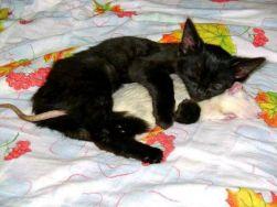 A Cat and a Rat, Imagine That (winkgo.com)