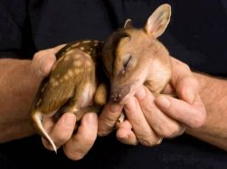 A fawn in the hand... (winkgo.com)