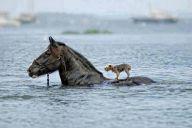 A Friend In Need... (winkgo.com)