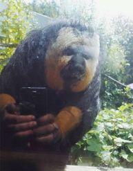 Bigfoot Taking Selfie (piximus.net)
