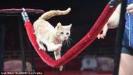 Catrobatics, Tightrope (dailymail.co.uk)