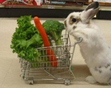 Competitive Shopping, Vegetarian Divsion (funnyjunksite.com)