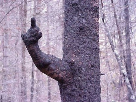 Disapproving tree (cheezburger.com)