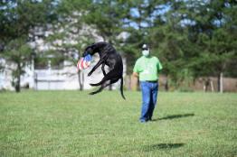 Frisbee Catch (World Record-Holder 'Ralph')