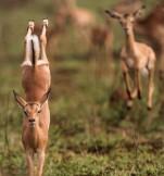 Gymnastics - Perfectly executed Impala hand (hoof) stand (catersnews.com)