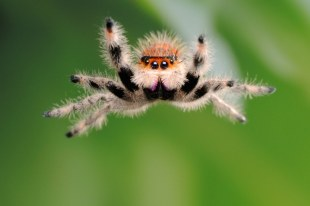 High Jump, Spider Division - photo by Scott Linstead (today.com)