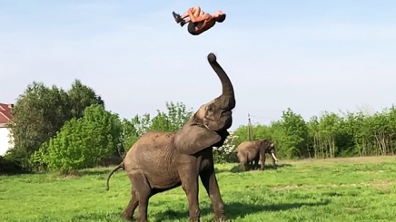 Human-Toss, Elephant Division (rightthisminute.com)