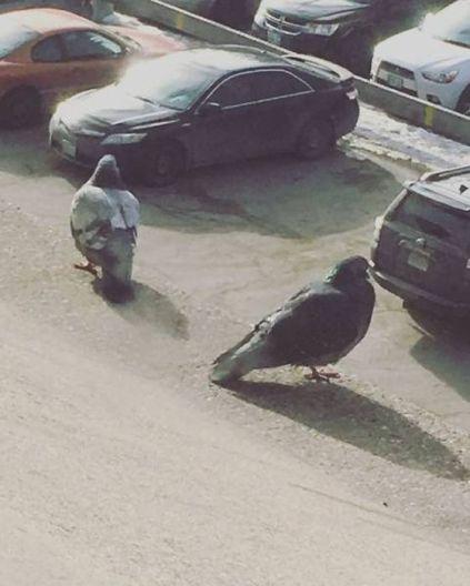 Look closer! (pigeons on rooftop) (piximus.net)