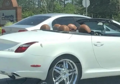 One of theses headrests is not like the others Mr_Malvic (reddit.com)