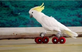 Roller Skating (pinterest.com)