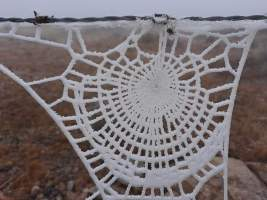 This spider has taken up knitting (reddit.com)