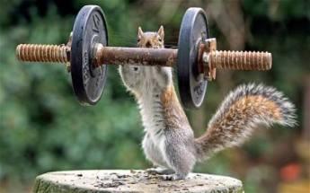 Weight Lifting - Half Kilogram