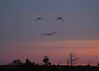 When Nature's happy, everyone's happy (moillusions.com)