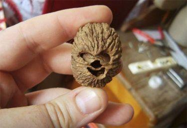 Chewbacca nut (ebaumsworld.com)