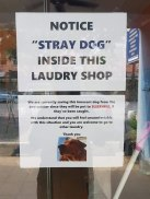 Dog-loving Laundromat -Malyasian Dogs Deserve Better (boredpanda.com)