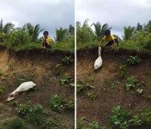Good samaritan duck returns boy's flip-flop -MylaAguila (boredpanda.com)