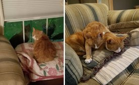 'I rescued a stray cat in my neighborhood. After his brother repeatedly came to visit him, I had no other option but to adopt them both' -JDeebs (boredpanda.com)