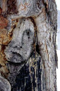 Lonely tree (mererecorder.tumblr.com)