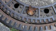 manhole-friend