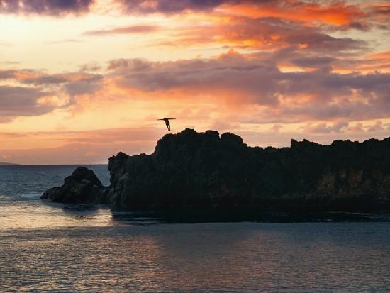 Maui cliff diver at sunset - Andre Gaulin (unsplash.com)
