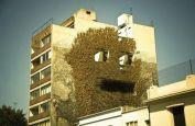 Peeping Ivy (ebaumsworld.com)