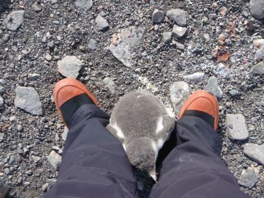 'That Time I Became A Mother In Antarctica' -mummabia (boredpanda.com)
