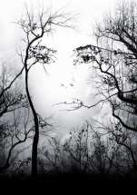 Woman of the Woods - NRHatch (wordpress.com)