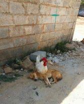 Different Species. Differen Nap Preferences - doggo_taxi (boredpanda.com)