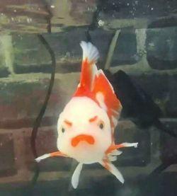 'Hey, fish have rights too, buddy!' - doggo_taxi (boredpanda.com)
