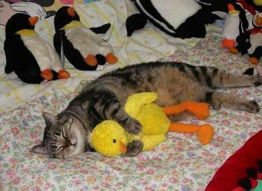 His Second Kittenhood - doggo_taxi (boredpanda.com)