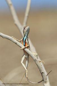 'I look tres sophisticated I look in my new tux' - Aditya Kshirsagar - (boredpanda.com)