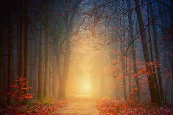 Mysterious Light - Johannes Plenio (pexels.com)