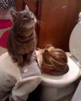 Nurse Cat - doggo_taxi (boredpanda.com)
