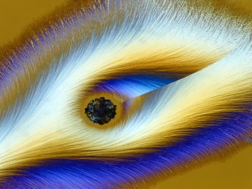 Peacock feather look-a-like...actually, it's highly magnified Vitamin C - Karl E. Deckart (nbcnews.com)
