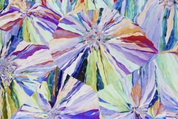 Salicin crystals from Willow Tree bark (a traditional painkiller) - David Maitland (nikonsmallworld.com)