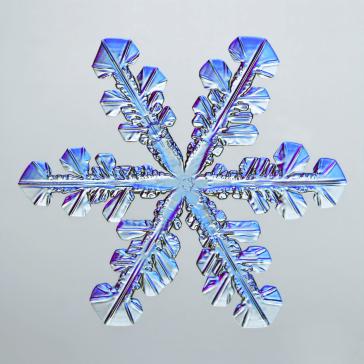Snowflake - Caleb Foster (nbcnews.com)