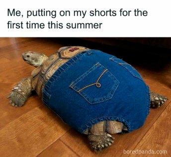 Summer Shorts (boredpanda.com)