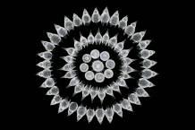 Zooplankton - Stefano Barone (nikonsmallworld.com)