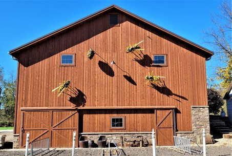 Cuyahoga Valley National Park - Yellowjackets taking over a nearby barn
