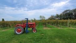 Westfield - Johnson Estate Wines vineyard
